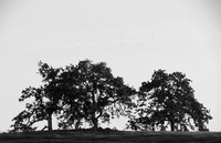 Hilltop trees black and white